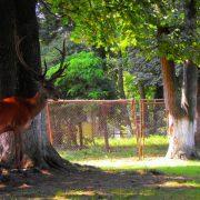 Gradina-Zoologica-Radauti-locuri-de-vizitat